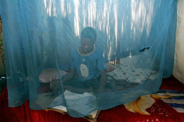 África: mosquiteiros impactam negativamente ecosistema do continente