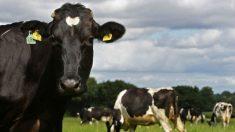 Novo guia de alimentação apoia menos consumo de carne