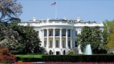 Casa Branca responde à petição sobre a extração forçada de órgãos na China