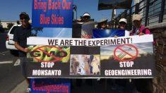 Parlamento Europeu aprova lei que permite cultivo de OGM