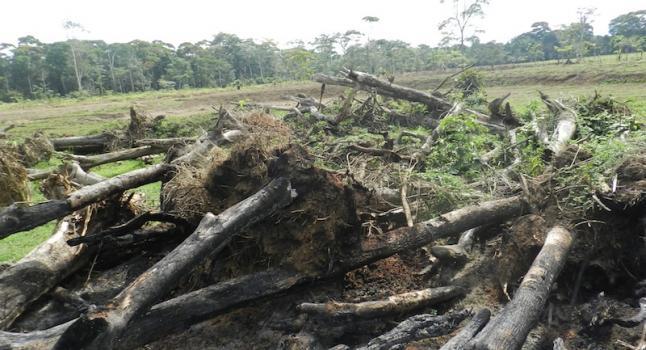 A cada ano, 13 milhões de hectares de florestas são desmatados no mundo