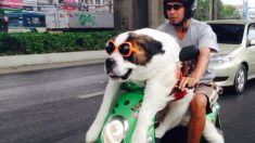 Veja por que andar de moto na Tailândia não é como em qualquer outro lugar (+Fotos)