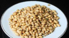 O mito da soja saudável: os prejuizos da soja para a saúde