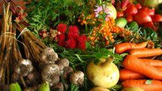 O sucesso da agricultura orgânica: não a OGMs e agrotóxicos