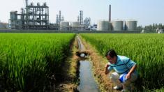 Confissão de funcionário mostra situação de Agência Ambiental da China