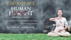 "Filme ""Colheita Humana"" ganha o prestigioso Prêmio Peabody"