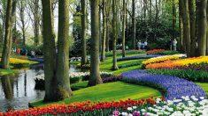 Jardim Keukenhof, um espetáculo de cores