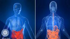 Medicina chinesa é ótima alternativa para tratar doenças intestinais