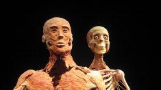 O segredo obscuro das exposições de corpos plastinados