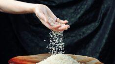 Cultivo de arroz gera discussão devido ao elevado consumo de água