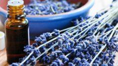 Óleos essenciais que aliviam a dor: hortelã, resinas e rizomas