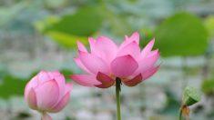 Jovem é preso na China por compartilhar figura de flor de lótus