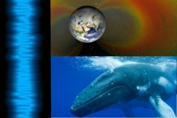 Sons do espaço se assemelham aos sons de baleias: ouça aqui