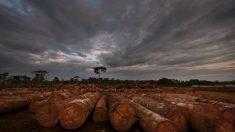 Madeira moçambicana é exportada ilegalmente para China