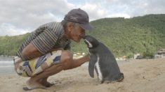 Pinguim nada 8 mil km para reencontrar homem que salvou sua vida