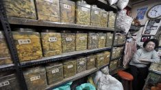 Poluição na China está destruindo plantio de ervas medicinais chinesas