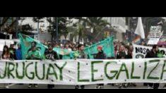 Legalização da maconha não diminuiu tráfico no Uruguai, diz autoridade