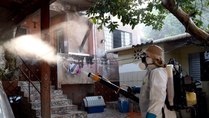 Relação entre zika e defeitos congênitos foi muito exagerada, dizem pesquisadores