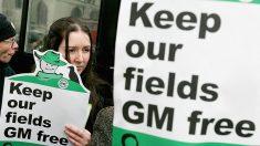 OGM 2.0: novo tipo de alimento geneticamente modificado