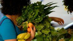 Agricultura lidera preservação no Brasil, segundo Embrapa