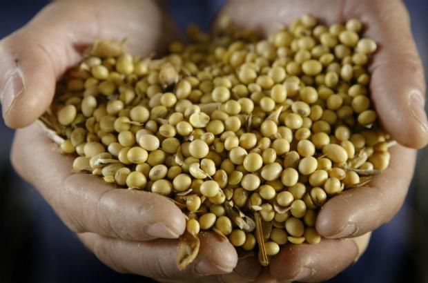 Comissão de Biossegurança libera soja geneticamente modificada