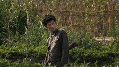 Soldados na Coreia do Norte atacam lavouras após suas provisões de alimentos serem cortadas