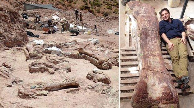 Encontram na Argentina maior dos dinossauros: dez vezes tamanho do Rex