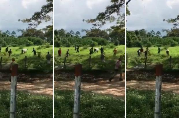 Venezuela: pessoas desesperadas matam vaca a pedradas para saciar fome (Vídeo)