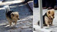 Cão foge de casa todos os dias após morte de dono ─ então um dia o filho planeja segui-lo
