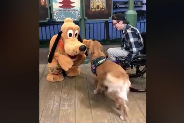 Cão de serviço tem reação incrível ao ver versão viva de seu bicho de pelúcia