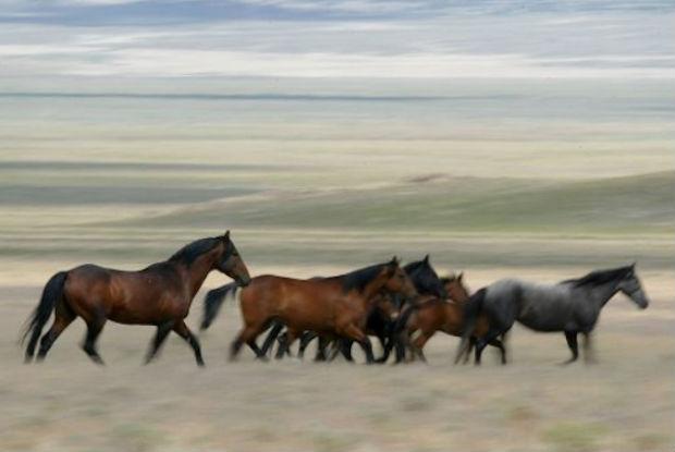 Cavalo selvagem segue seu instinto e salva dona do perigo