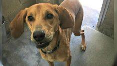 Animais podem ser salvos através da boa vontade e doação humana