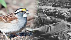 A falta de sabedoria leva uma nação a ruína: como o simples ato de matar pardais matou milhões de pessoas pela fome