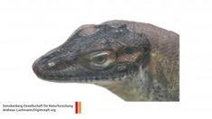 Cientistas revelam que este lagarto extinto tinha quatro olhos