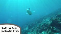 Peixe-robô esta ajudando a desvendar mistérios das profundezas