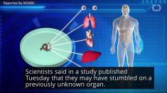Cientistas descobrem novo órgão no corpo humano