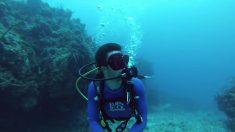 Mergulhador faz filmagem deslumbrante da vida nas águas da ilha Grande Caimão