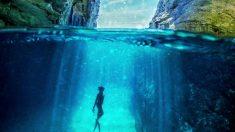 Veja estas fotos fantásticas do mundo submarino