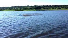 Hipopótamo persegue barco de turistas. É de assustar!