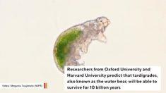 Cientistas preveem que 'ursos-d'água' serão os últimos seres vivos no planeta Terra