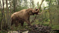 Crânio de mamute do fim da Era do Gelo é encontrado sob metrô em Los Angeles