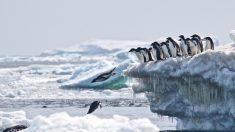 Megacolônia de pinguins é descoberta, dando esperança a cientistas