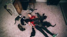 Gatos são os primeiros animais de estimação confirmados com Covid-19 nos EUA