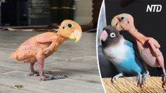 Pássaros perdem penugem devido à doença, mas suas personalidades compensam perda