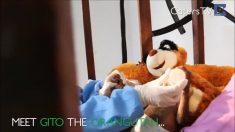 Orangotango-bebê é encontrado numa caixa à beira da morte. Mas depois de resgatado, veja como ele está agora!