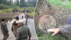 Cão fiel conduz equipe de resgate até menina de três anos perdida na selva siberiana por 12 dias e noites