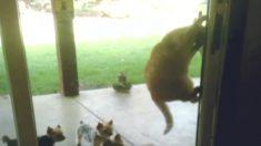 Veja esse vídeo de cães e gatos provocando uns aos outros... É muito divertida!