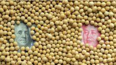 """China lança campanha de """"emergência"""" para impulsionar produção nacional de soja"""