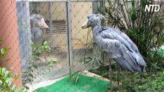 Duas aves enormes se encaram num zoológico no Japão e resultado é impressionante