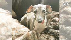 Cadela tímida tinha medo de tudo, mas quando bebê se junta à família, cão se transforma